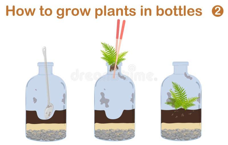 Hur man växer växter i flaskor stock illustrationer