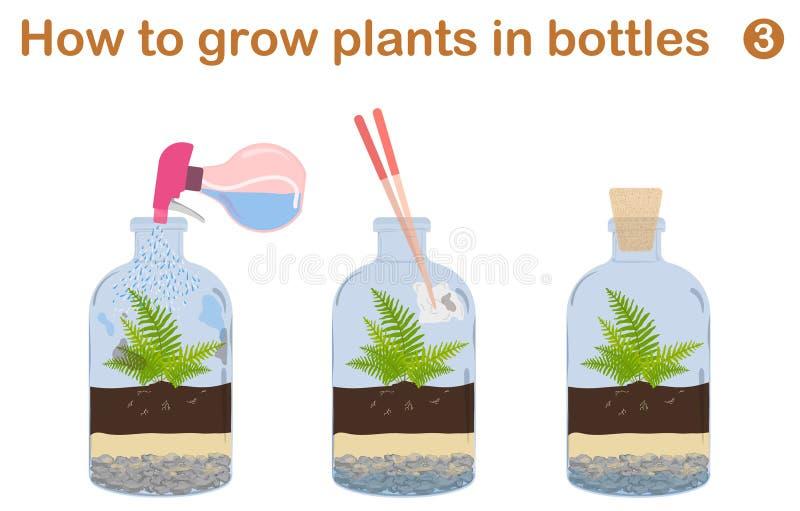 Hur man växer växter i flaskor royaltyfri illustrationer