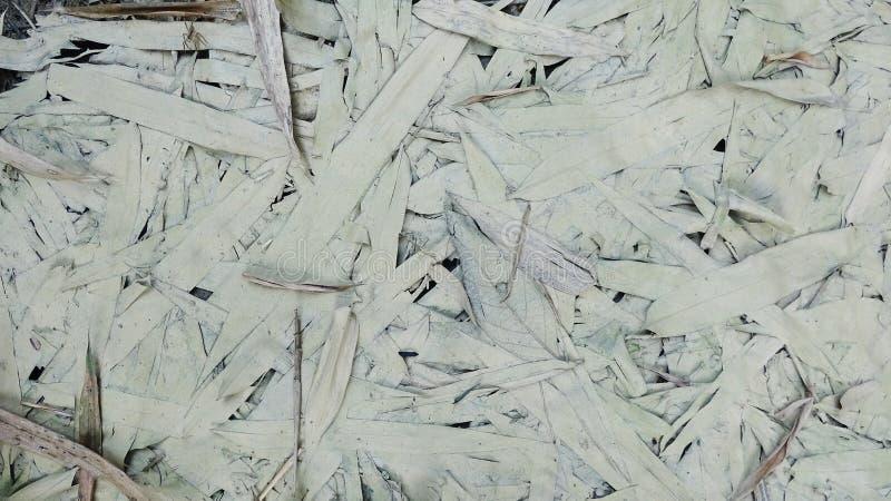 Hur sidorna av bambu blöts i vatten royaltyfria foton