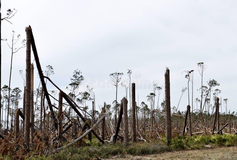 Huracán Michael Tree Damage #1 fotos de archivo