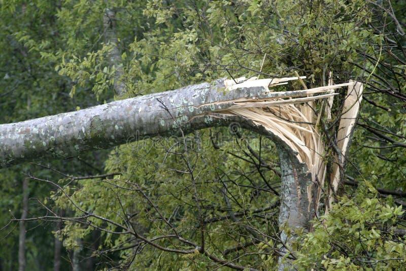 Huracán quebrado del árbol imágenes de archivo libres de regalías