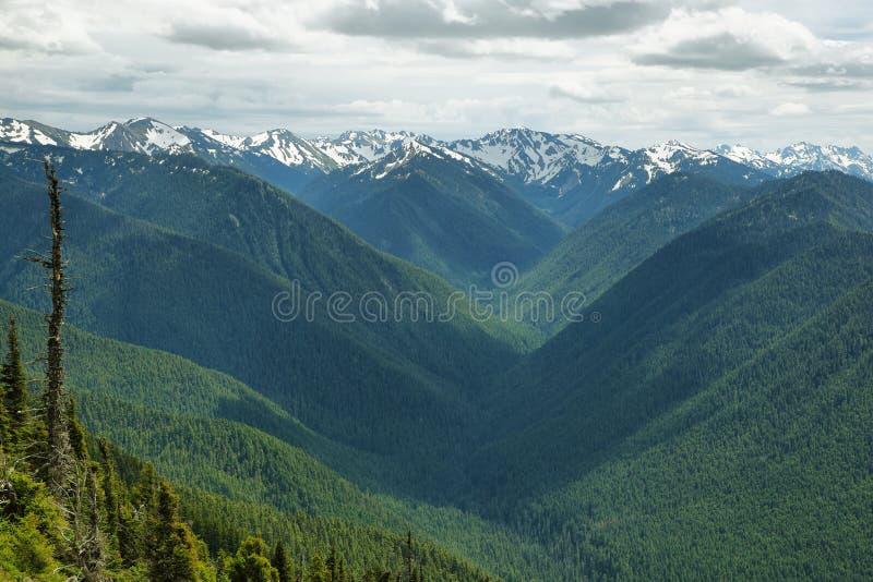 Huracán Ridge del parque nacional olímpico, WA, los E.E.U.U. imágenes de archivo libres de regalías