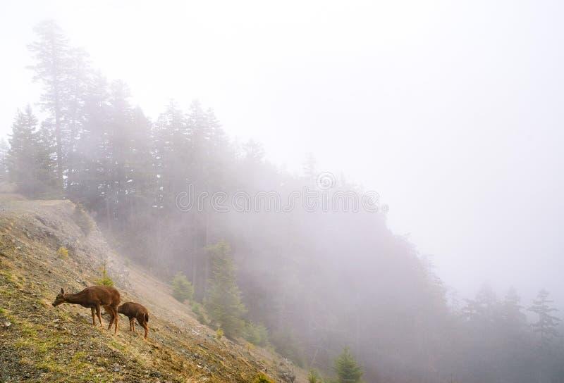 Huracán Ridge, parque nacional olímpico imagen de archivo libre de regalías