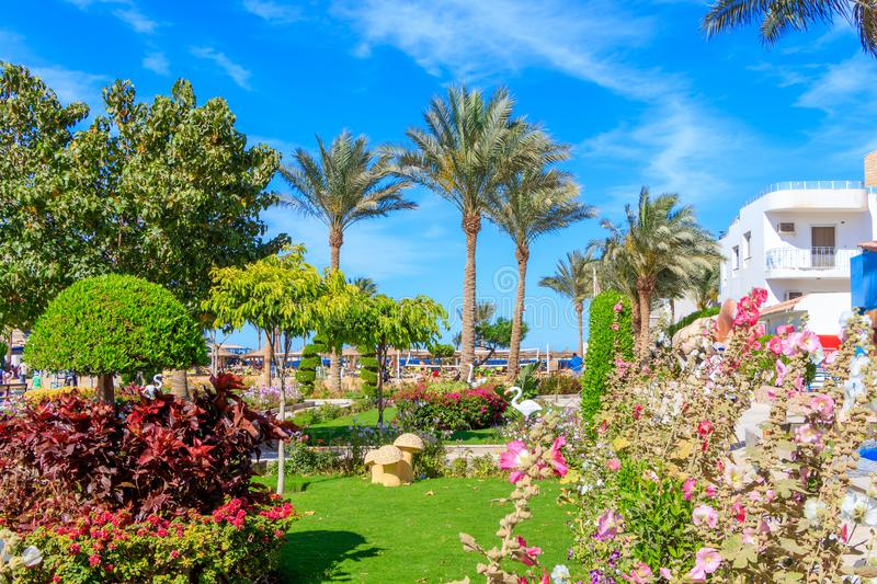 Egyptian garden with flowers in hotel Seagull Beach Resort royalty free stock image