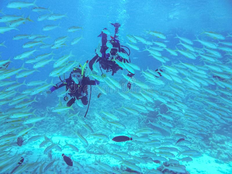 Hurghada, Egypte - April 20, 2009 Vrij duikenpaar die tussen vissen in Rode Overzees zwemmen stock afbeelding