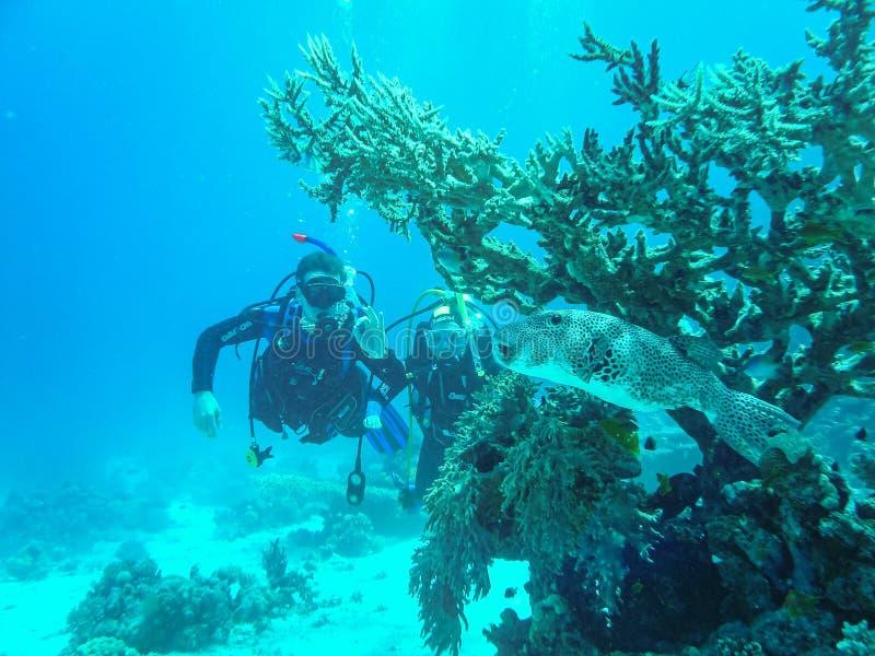 Hurghada Egypten - April 20, 2009 Simning för par för dykapparatdykning mellan fisken i Röda havet royaltyfria foton