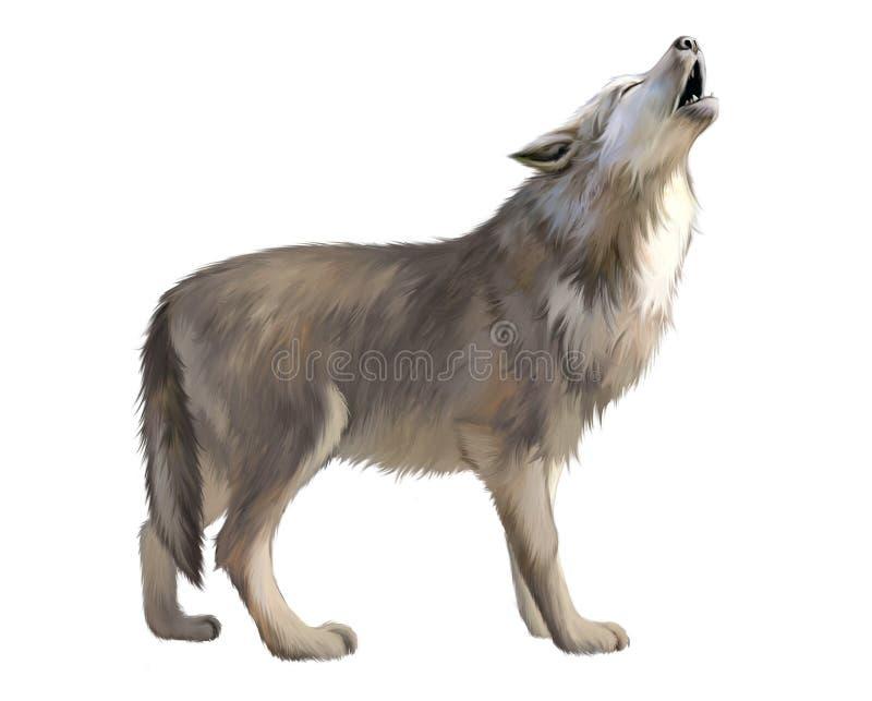 Hurlement adulte de loup à la lune. illustration de vecteur