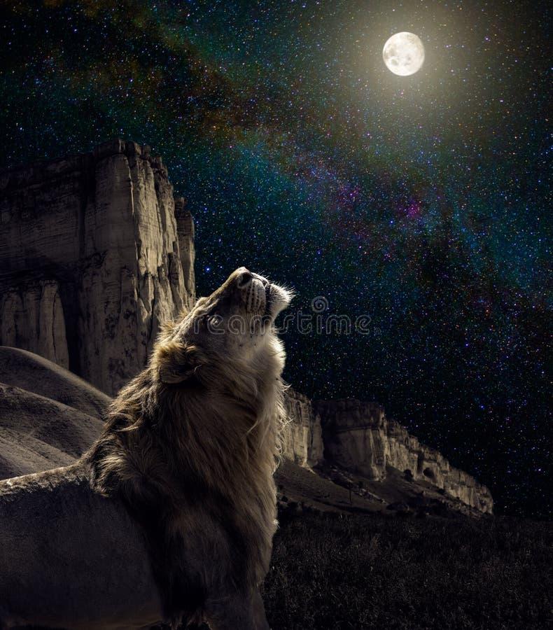 Hurlement de lion à la lune image stock