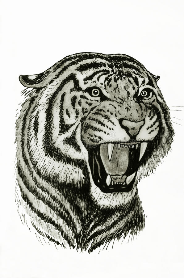 Hurlement de tigre illustration stock