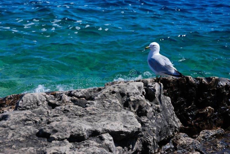 huron podobieństwo jeziora lato zdjęcie royalty free