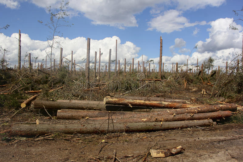 After hurricane. Belarus-August 7, 2016 After a powerful storm left broken and fallen trees, felled forest after hurricane after cutting logs lying on the ground stock images