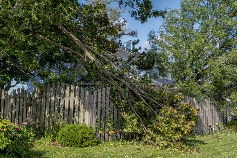 Hurricane Dorian Hits Eastern Canada. Falling tree damage from Hurricane Dorian in residential area of Prince Edward Island, Canada stock photos