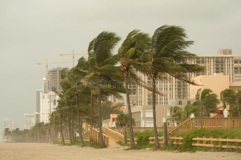 Hurricane Gusts royalty free stock photography