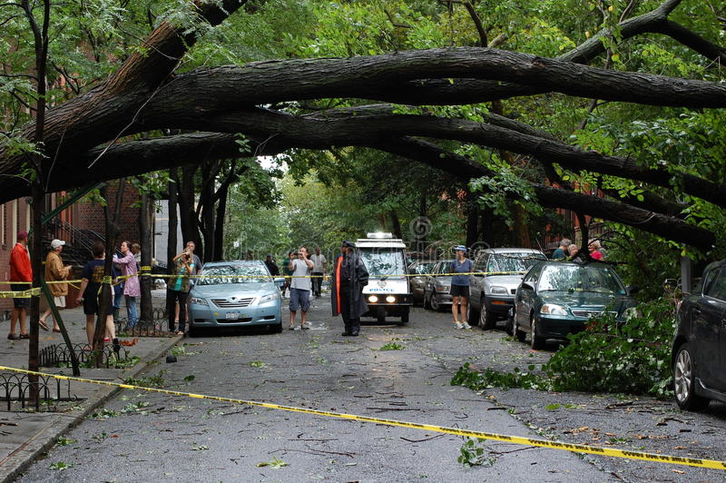 Hurricane Irene damage. Hurricane Irene made landfall in New York City on the morning of August 28, 2011. This large tree fell during the night in Brooklyn stock photography