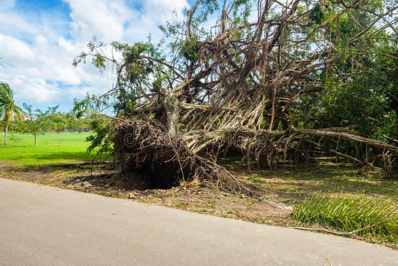 Hurricane Irma Aftermath royalty free stock image