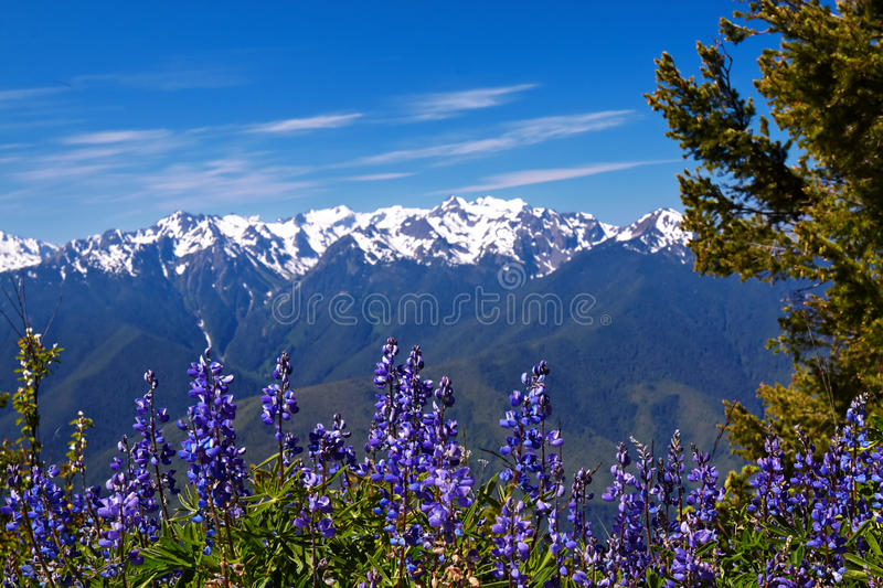 Download Hurricane Ridge stock image. Image of meadows, hill, outdoor - 13285579