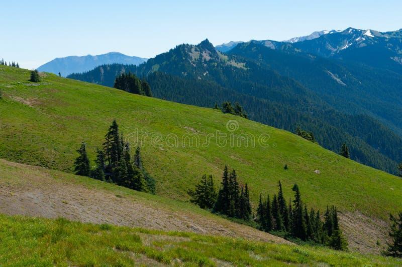 Hurricane Ridge Hills royalty free stock images