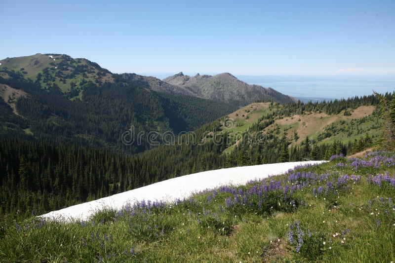 Hurricane ridge in Olympic national park royalty free stock photography