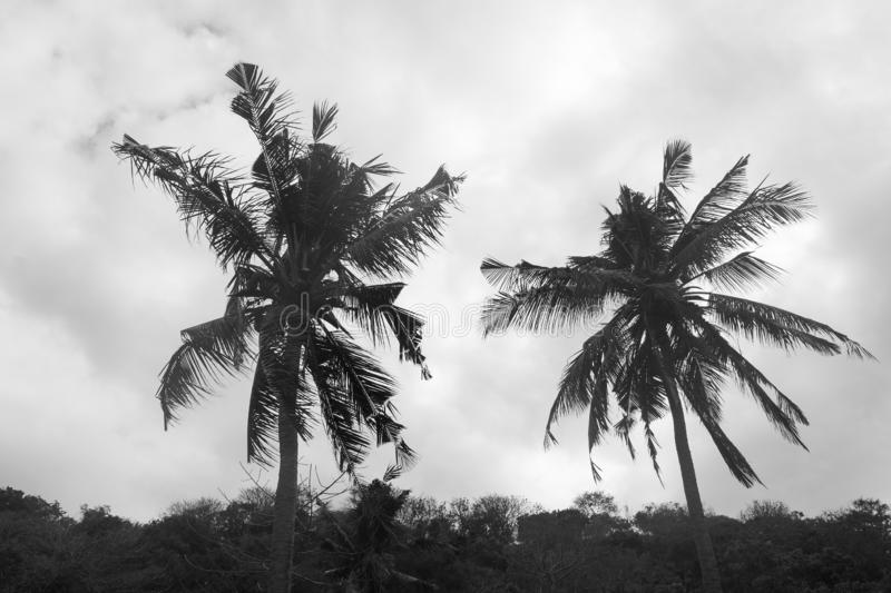 Hurricane warning system category 3 and 4 super storm. Silhouette palms stock images