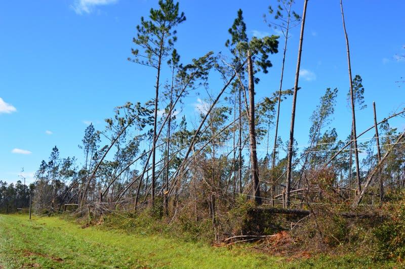 Hurrikan schädigte Bäume und niedergeworfene Stromleitungen stockfotografie