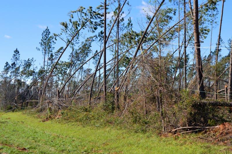 Hurrikan schädigte Bäume und niedergeworfene Stromleitungen lizenzfreies stockbild