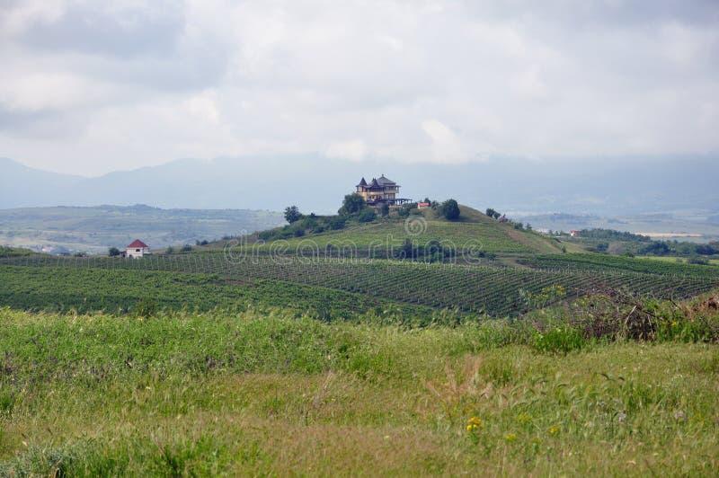 hus över vingård royaltyfri fotografi