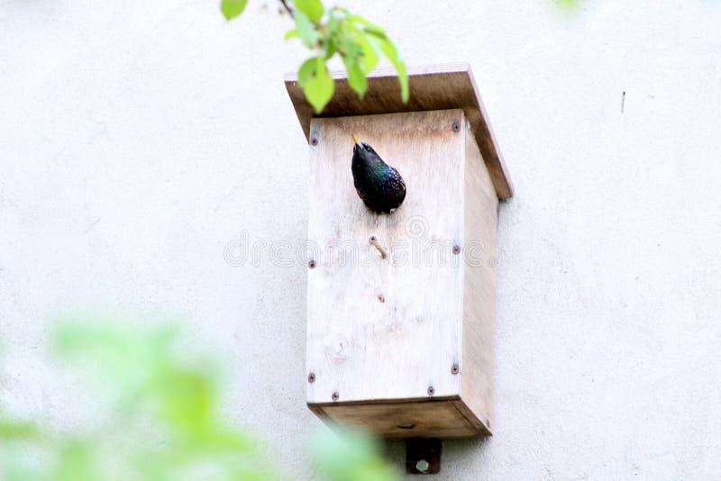 Hus av fågeln arkivbilder