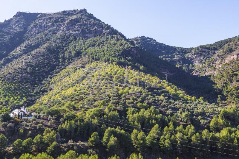 Hus av kullen på klyftan av Gaitanesen, Malaga royaltyfri bild