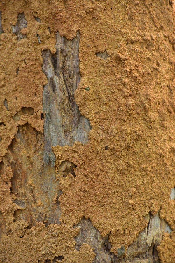 Hus av termit på yttersidan av en trädstam Ett hus för texturtermites'lera royaltyfri fotografi