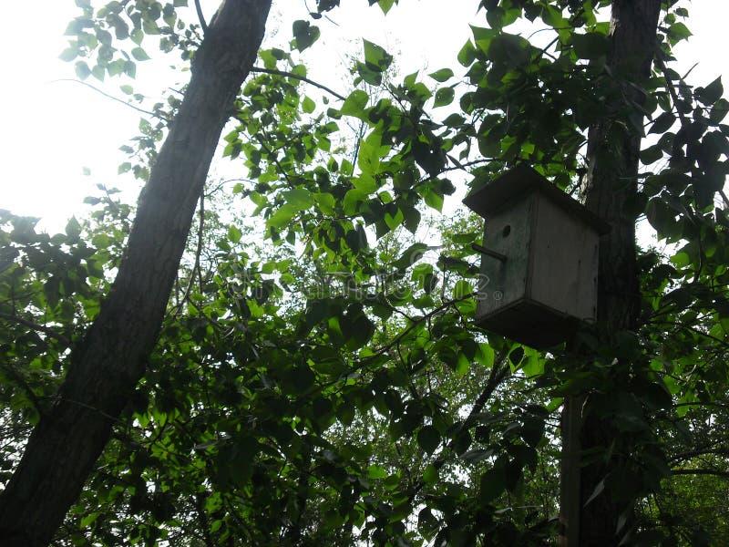 Hus för fåglar royaltyfria foton