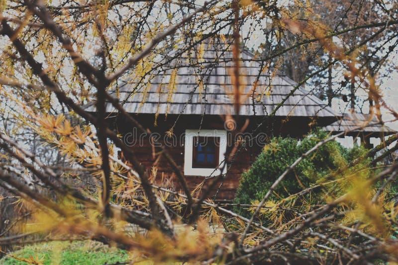 Hus i skogen royaltyfria foton