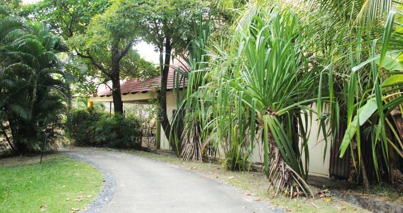 Hus i trän bak träd på den smala gatan royaltyfria bilder