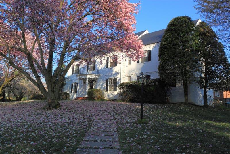 Hus med blomningträdet royaltyfria bilder