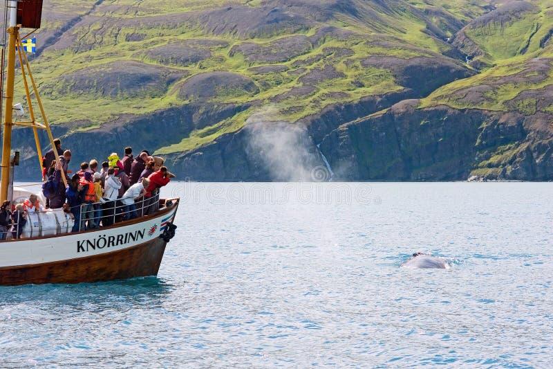 Husavik, Islanda - luglio 2008: Sorveglianza della balena immagine stock libera da diritti