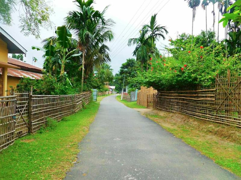 Husbyväg och naturliga träd arkivbild