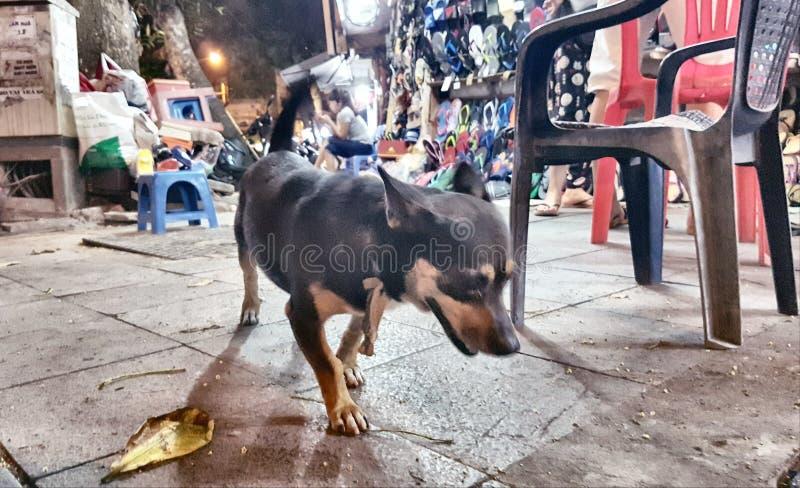 Husdjur av Hanoi arkivbild