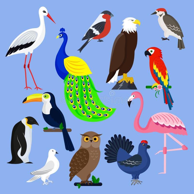Husdjur för fjäder för olik för vektor för fågelartsamling för illustration för löst djur avifauna för tecken tropiska royaltyfri illustrationer