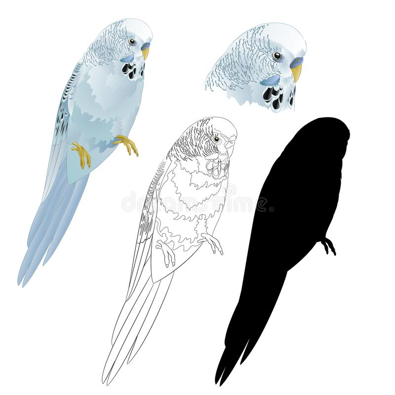 Husdjur för hem för parakiter för husdjur för fågelparakiterundulat naturligt blått eller budgie- eller skalparakiteroch översikt stock illustrationer