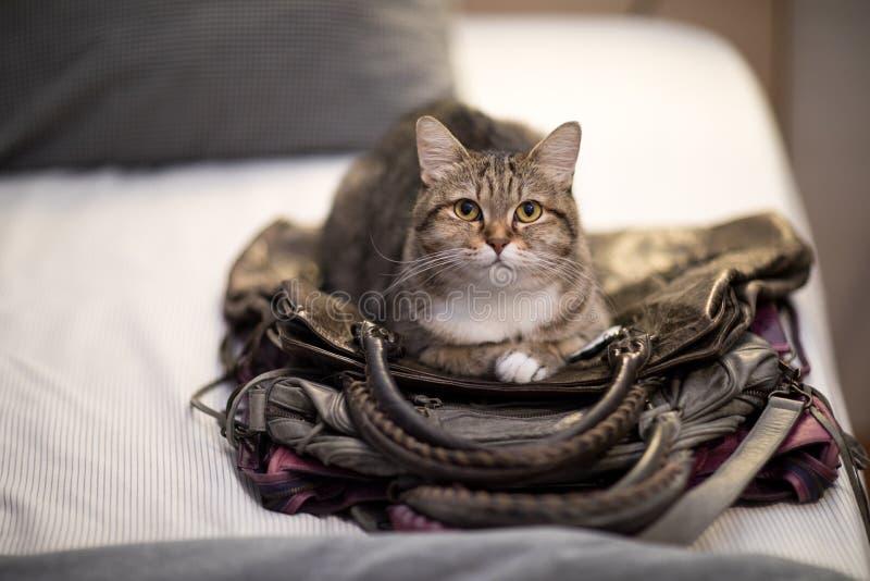Husdjur för instinkt för kattsömnpåse djurt älskvärt royaltyfria foton