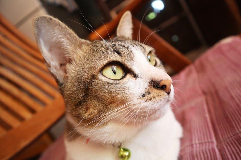 husdjur för kattkattungepott arkivfoton