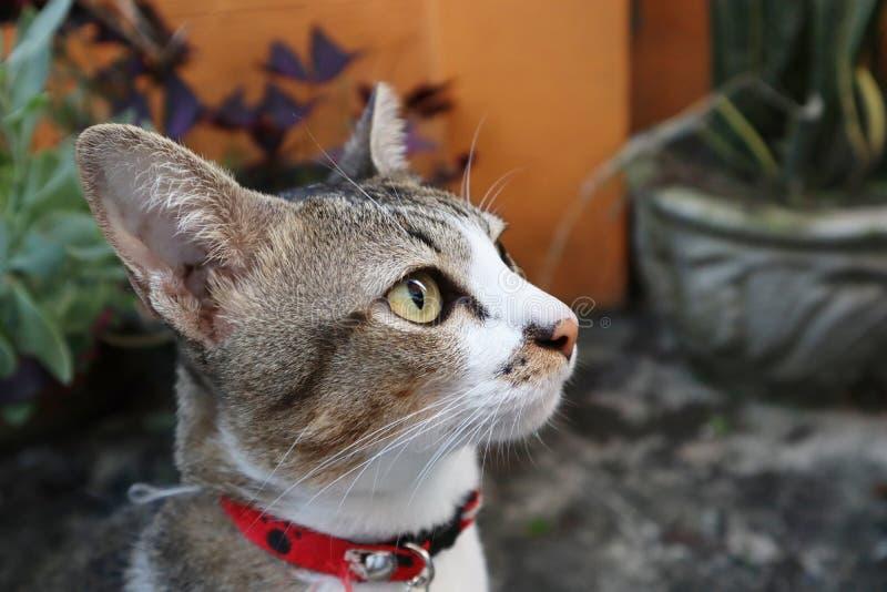 husdjur för kattkattungepott royaltyfri bild