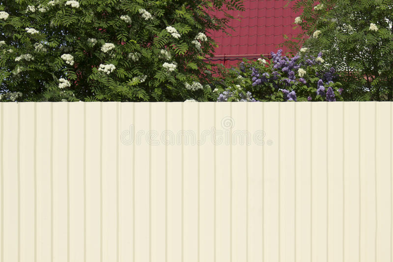Huset med ett rött tak och en trädgård blockeras av en högväxt whit arkivbild