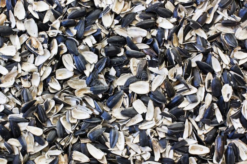 Husk sunflower seeds. Sunflower close-up.  royalty free stock photo