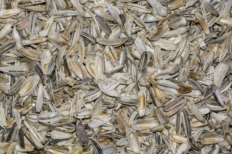 Husk sunflower seeds close-up background texture.  royalty free stock photos