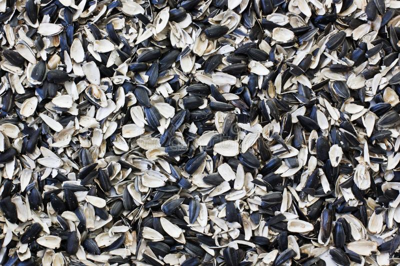 Husk sunflower seeds. Sunflower close-up.  royalty free stock image