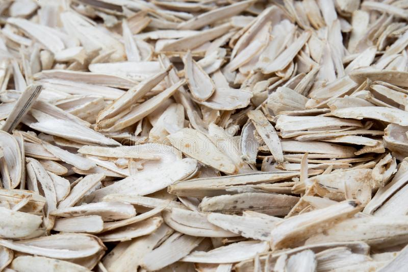 Husk of white roasted sunflower seeds with spices and salt closeup, selective focus.  stock photo