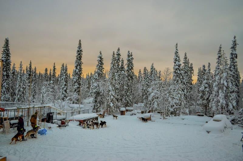 Huskies med deras instruktörer nästan skogen royaltyfri fotografi