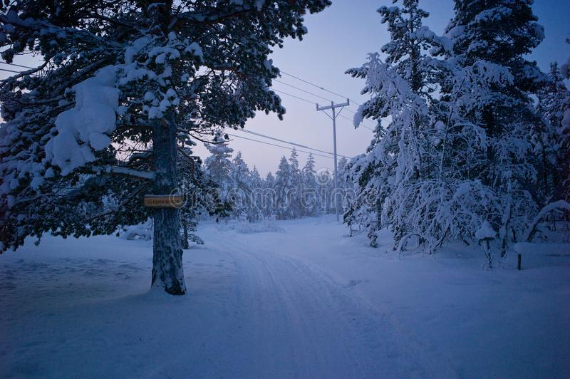 Huskies track in the middle of frozen pines forest. stock image