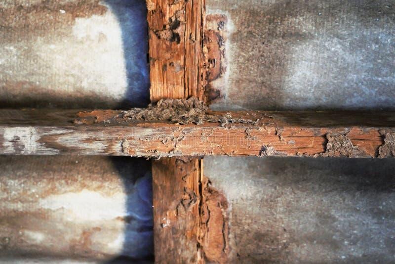 Huskonstruktion med termitskada arkivbilder