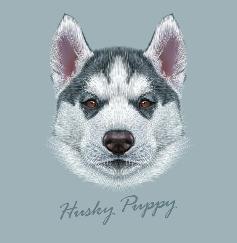 Free Husky Animal Dog Cute Face. Vector Alaskan Puppy Head Portrait. Realistic Fur Portrait Of Siberian Dog On Gray Background Stock Photos - 142326573